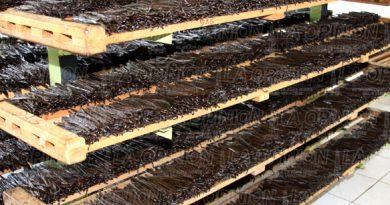 En peligro la cosecha de vainilla