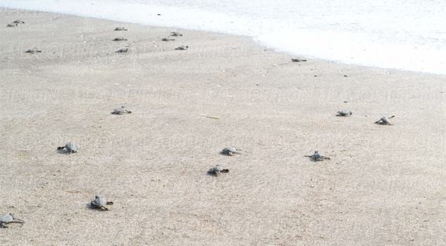 garantizan-cuidado-a-habitat-de-tortugas