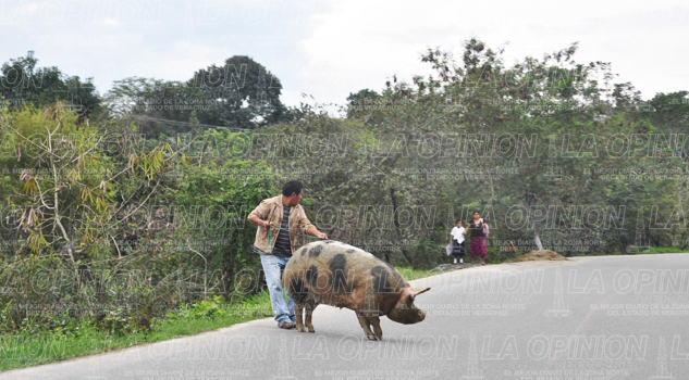 hasta-los-cerdos-se-roban