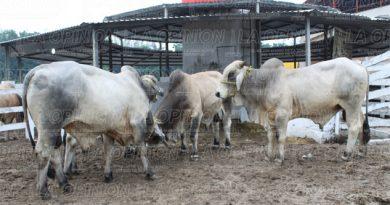 adeudan-proagro-a-miles-de-ganaderos