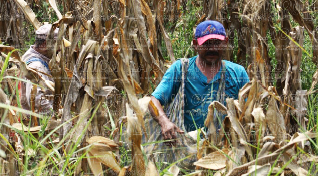 en-riesgo-el-agro-estatal