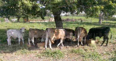 ganaderos-aun-no-reciben-apoyos-de-progan