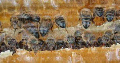miel-de-china-y-argentina-golpea-a-apicultores-mexicanos