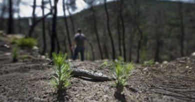 reforestaran-isla-grande-tras-incendio-de-87-hectareas
