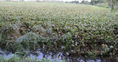 dragados-incumplidos-causaron-inundaciones-en-tampico