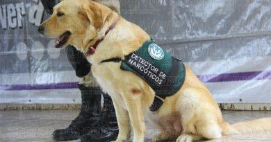 perros-policia-buscan-droga