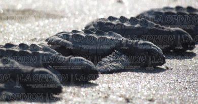 sin-dinero-para-cuidar-tortugas