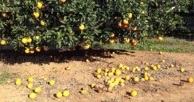 Dragón amarilloamenaza cultivos de cítricos