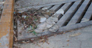 tapan-drenajes-con-restos-de-animales