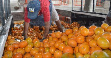 Exportarán más de seis mil toneladas de naranja a EU