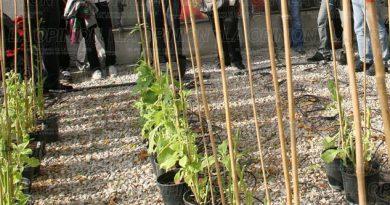 Impulsan la agrobiotecnología