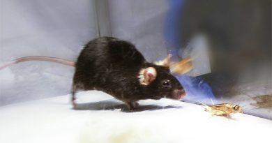 Logran desactivar el 'instinto asesino' dentro del cerebro