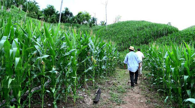 Productores de maíz y frijol esperan más apoyos