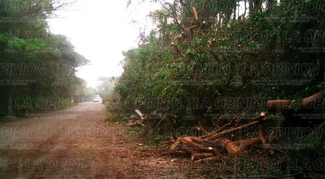 Acaban con decenas de árboles
