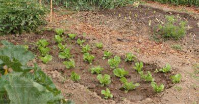 Agricultura de autoconsumo