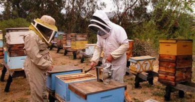Baja producción de miel
