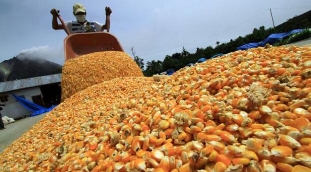 México importará maíz de Argentina