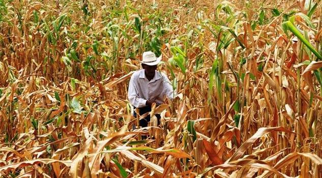 No ha llovido; productores del campo, preocupados