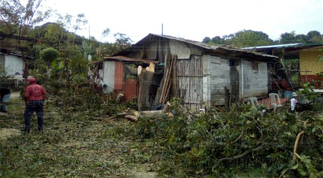 Piden derribo de árboles que representan riesgo