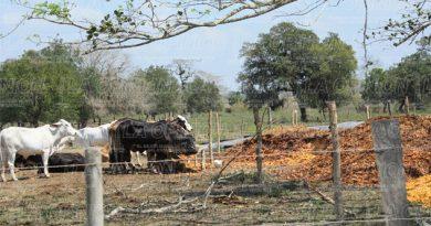 Preocupa a ganaderos falta de lluvias