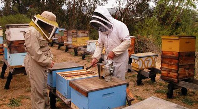 Productores de miel están en crisis
