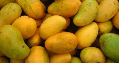 Productores mexicanos enviaron 12.5 tons de mango en EU