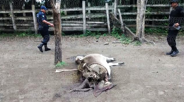 Roban a ganaderos y no acuden a denunciar