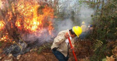 Se queman 30 hectáreas de bosque