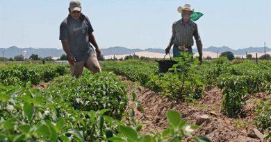 Agricultores de Estados Unidos buscan evitar disputa comercial con México