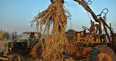 Cancela México permisos de exportación de azúcar a EU