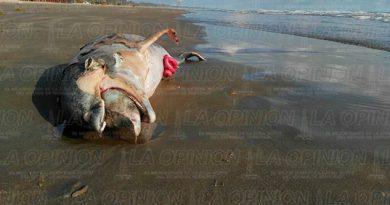 Delfín Muerto Zona Turística Barra Norte