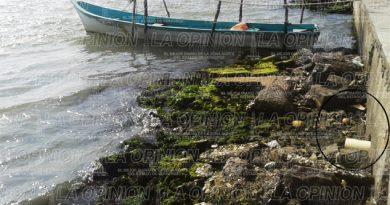 Descargas sanitarias amenazan laguna de Tamiahua