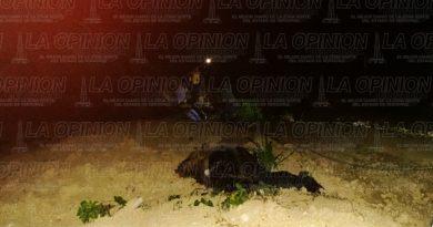 Dos ejecutados en la autopista Tihuatlán - Papantla