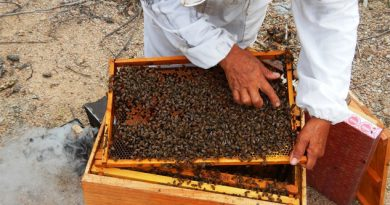 Hacen cerveza a base de miel