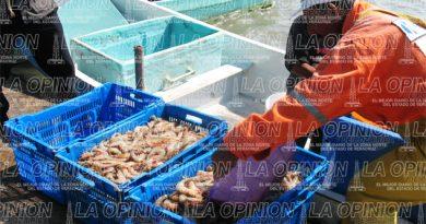 Mejora captura de camarón