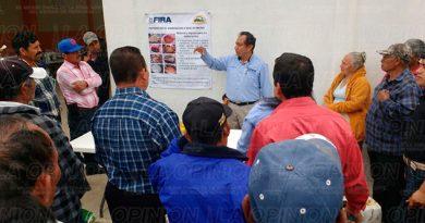 Productores Cítricos Información Fertilizantes Abono