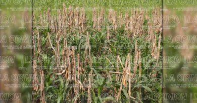 Productores de maíz y cítricos piden proyectos productivos