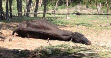 Aparecen casos de rabia bovina