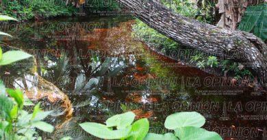 Arroyo contaminado tras volcadura de pipa