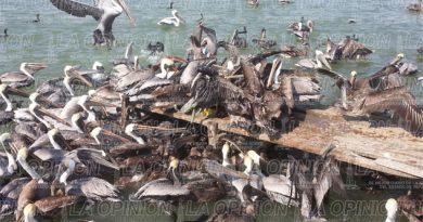 Buscan industrializar desechos de pescado
