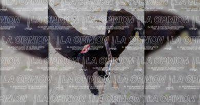 Denuncian maltrato animal; machetean a una perrita