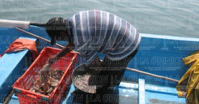 Escasea pescado y marisco