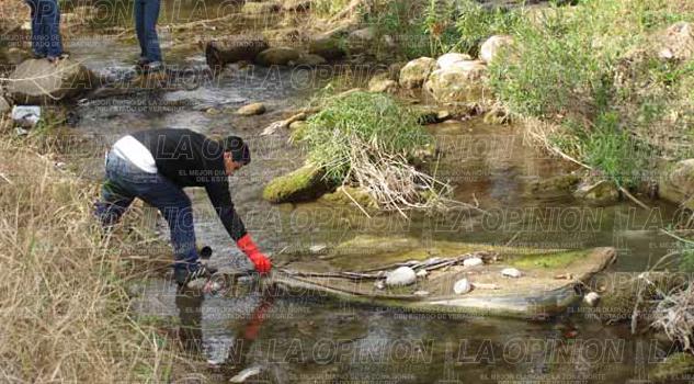 Mortandad de reses por contaminación en ríos