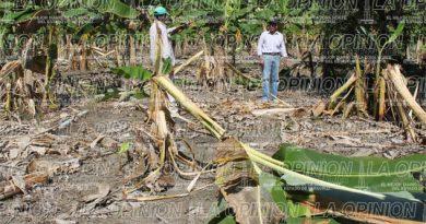 Sequía afectará el campo