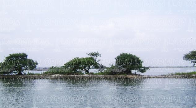 Trabajan para conservar los manglar