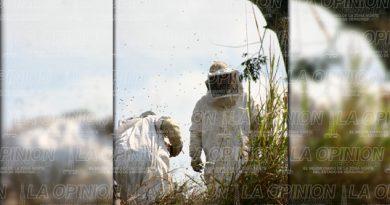5 lesionados en ataque de abejas