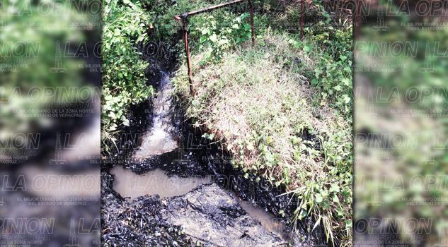 Brote de chapopote en la colonia Francisco I. Madero