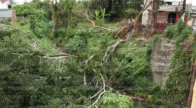 Caída de árbol bloquea cauce del Cocineros