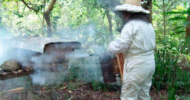 Desalojan escuelas por ataques de abejas