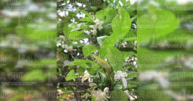 Incertidumbre en el agro alamense